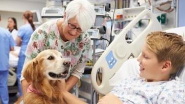 A kutyatartás negyedével csökkenti a bármely okból bekövetkező halálozás kockázatát - A cikkhez tartozó kép