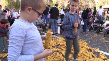 Magyarkanizsa: Ha október, akkor Kukoricafesztivál! - A cikkhez tartozó kép