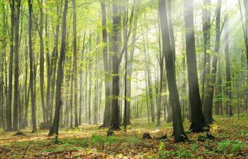 Napi fotó: November elején kezdődik az Ültess...