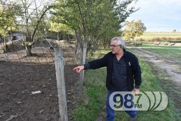 Gyilkosság a tanyán: Egy pónit és egy szamarat lőttek le Apatinban - A cikkhez tartozó kép