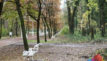 Palics: Kivágtak negyven fát a sétányon - illusztráció