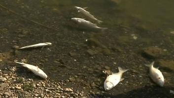 A csatorna óbecsei szakaszán a szennyezett víz, amely halpusztulást okozott Szenttamásnál - illusztráció
