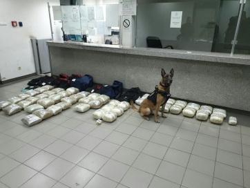 Több mint ötven kilogramm marihuánát foglaltak le a horgosi határátkelőn - A cikkhez tartozó kép