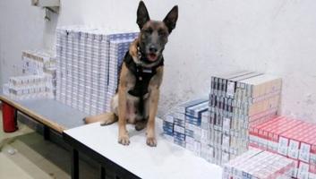 Horgos: Kutya szimatolta ki a csempészett cigarettát - illusztráció