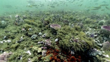 Rendkívül gyorsan fogy az oxigén az óceánokból a felmelegedés miatt - illusztráció