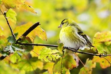 Hangosabb éneklésre kényszeríti a madarakat a repülőgépek zaja - A cikkhez tartozó kép
