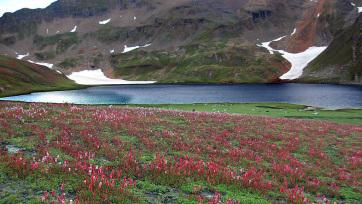 Egyre több növény él a Mount Everest térségében - A cikkhez tartozó kép