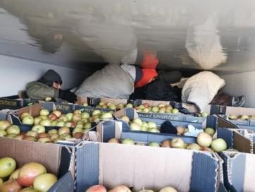 Horgos: Almával teli hűtőkocsiban bújtak el a migránsok - A cikkhez tartozó kép