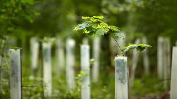 A környezetvédelmi minisztérium 41 millió dinárt szán erdősítésre - A cikkhez tartozó kép