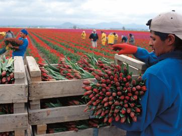 Rekordot döntött a holland mezőgazdasági export - A cikkhez tartozó kép