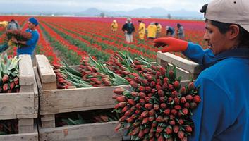 Rekordot döntött a holland mezőgazdasági export - illusztráció