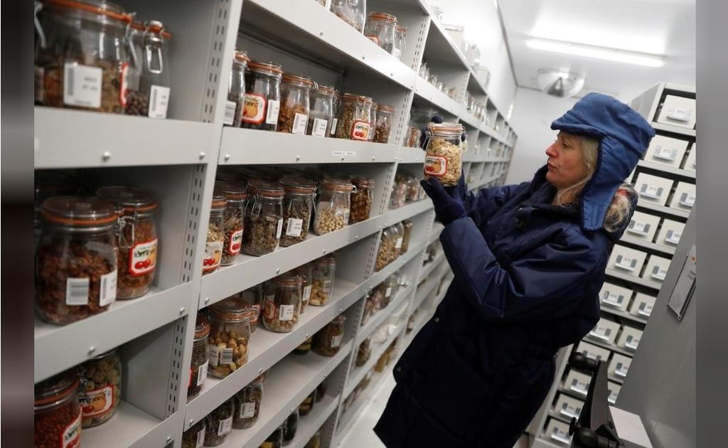 Dr. Elinor Breman biológus a világ legnagyobb magbankjának számító Millenniumi Magbankban (MSB)
