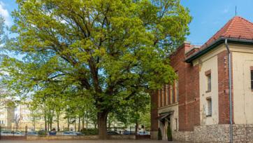 Február végéig lehet szavazni az Európai év fája magyar jelöltjére - A cikkhez tartozó kép