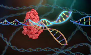 Génszerkesztéssel állították meg az egyik legagresszívebb mellrák sejtjeinek terjedését - A cikkhez tartozó kép