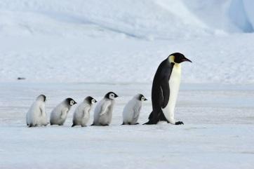 Hatszorosára gyorsult a jégolvadás Grönlandon és az Antarktiszon - A cikkhez tartozó kép