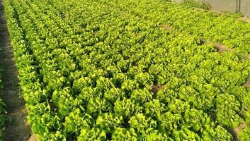 Agrárközgazdász: Meg kell találni a módját a piacok működésének, mert a termelők tönkremennek - illusztráció
