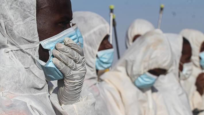 Maszkot viselnek a FAO sáskainvázió elleni programjának résztvevői