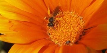 Mit tehetünk a méhek pusztulása ellen? - A cikkhez tartozó kép