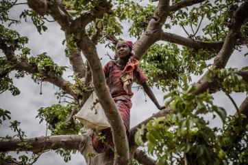 FAO: Lassul az erdőírtás mértéke, terjedőben a fenntartható erdőgazdálkodás - A cikkhez tartozó kép