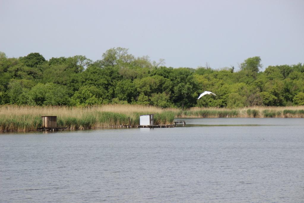 A topolyai tópartot a horgászok és kirándulók, de a szúnyogok is kedvelik