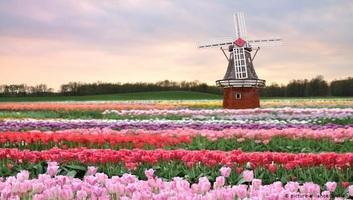 Kutatás: Hollandia lakossága 2050-re még sokszínűbb lesz - illusztráció