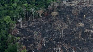 Még soha nem vágtak ki annyi fát Brazíliában, mint idén - illusztráció