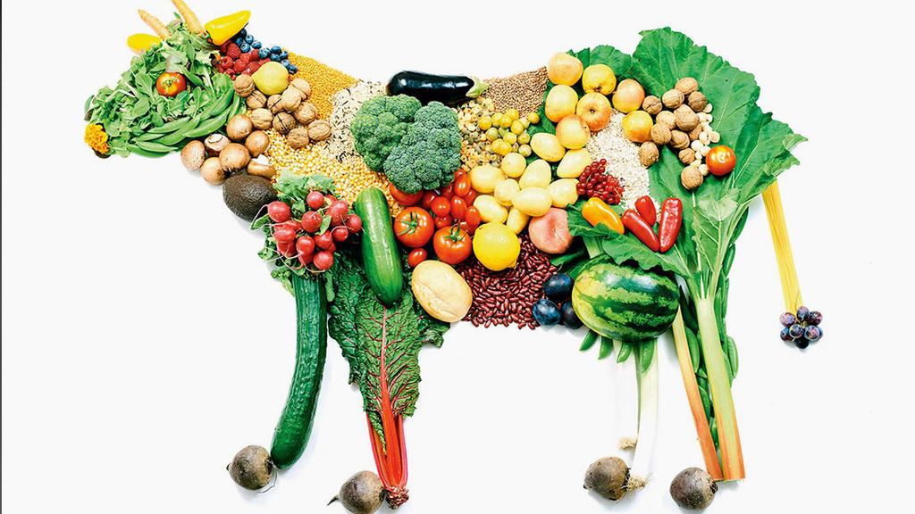Az ember által okozott üvegházhatású gázok 14,5 százaléka az állattenyésztés során termelődik