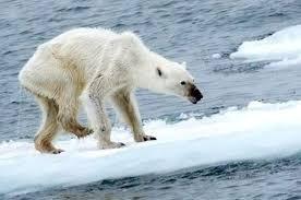 A fenyegetést nem maga a hőmérséklet emelkedése jelenti, hanem az, hogy a ragadozók nem tudnak alkalmazkodni a gyorsan változó környezetükhöz