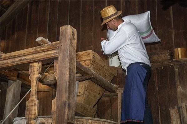 Búzát önt egy segítő egy szárazmalom garatjába a Kárpát-medencei Búzaösszeöntés Ünnepén a történelmi Magyarország közepén, Szarvason