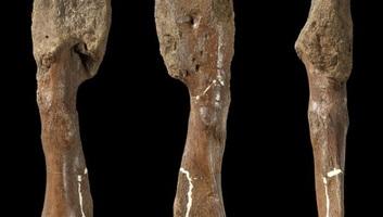 A dinoszauruszok is szenvedhettek rákban - illusztráció