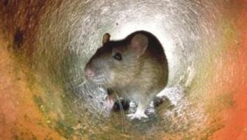 A természeti környezet átalakítása a betegségeket terjesztő állatoknak kedvez egy új kutatás szerint - illusztráció