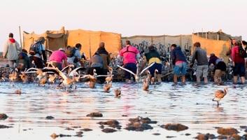 Több tízezer flamingó lepte el Dél-Franciaország lápjait - illusztráció