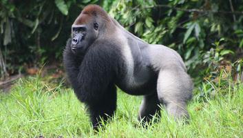 A vadon élő gerinces fajok populációi átlagosan kétharmaddal zsugorodtak 1970 óta - illusztráció
