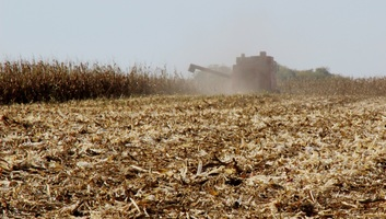 Mégsem lesz rekordtermés kukoricából Szerbiában? - illusztráció