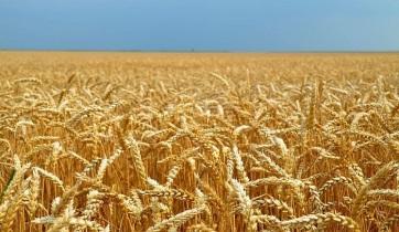 Nedimović: Ami az élelmet illeti, Szerbia az elkövetkező két évben nyugodt lehet - A cikkhez tartozó kép