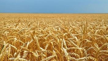 Nedimović: Ami az élelmet illeti, Szerbia az elkövetkező két évben nyugodt lehet - illusztráció
