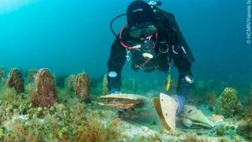 A sonkakagyló kihalása miatt aggódnak a horvát tengerbiológusok - illusztráció