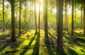Az európai erdők lombkoronájuk egyhatodát elveszítették az elmúlt harminc évben - A cikkhez tartozó kép