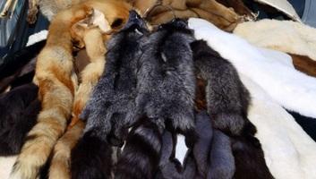 Betiltják az állati szőrmék kereskedelmét Izraelben - illusztráció