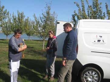 Megmentettek egy Muzslyán maradt gólyát - A cikkhez tartozó kép