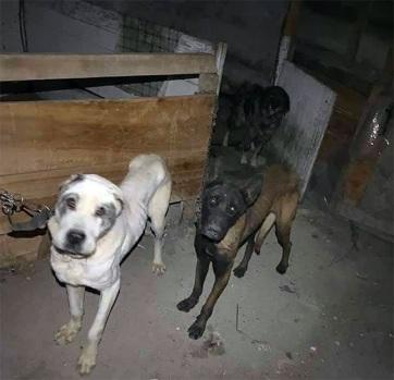 Szabadka: Letartóztattak egy állatkínzót - A cikkhez tartozó kép