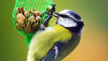 Megkezdődött a madáretetési szezon - illusztráció