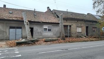 Zenta: 1700 új facsemete a község területén - illusztráció