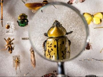 Évente a rovarok 1-2 százaléka tűnhet el a Föld színéről - A cikkhez tartozó kép