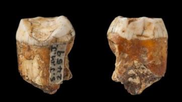 Egy tucat 48 ezer éves fog a neandervölgyi és a modern ember kereszteződésére utalhat - A cikkhez tartozó kép