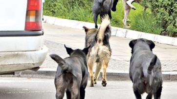 Szabadka: Stabil a kutyatámadás áldozatának állapota - A cikkhez tartozó kép