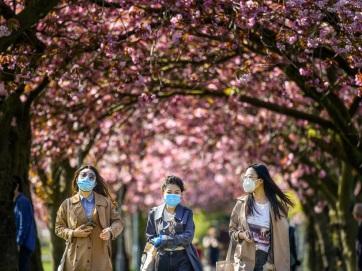 Gyümölcsfákat ültetnek Angliában a megemlékezés és a remény szimbólumaiként - A cikkhez tartozó kép