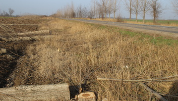 Kivágják a fákat a Verbász és Bácsfeketehegy közötti út mellett - illusztráció