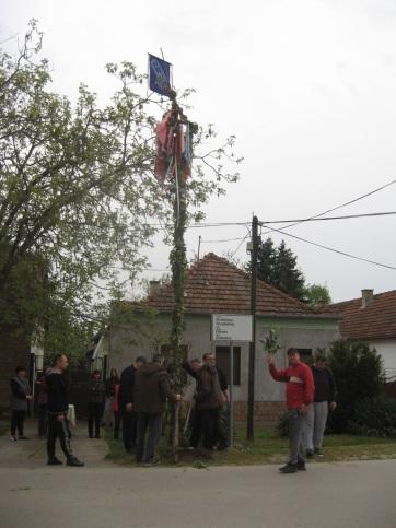 Muzslya: Több májusfát is állítottak az idén - A cikkhez tartozó kép