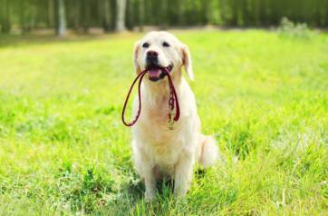 Zenta: Fokozottabb ellenőrzés a kutyatartók körében - A cikkhez tartozó kép